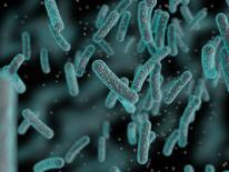 Microscope image of a pathogen